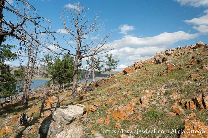 ladera llena de rocas cubiertas de líquenes naranjas y árboles secos