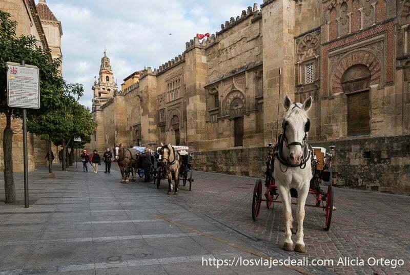 coches de caballos junto a la mezquita de córdoba