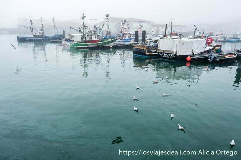 puerto pesquero de san juan de luz con pesqueros atracados y grupo de gaviotas en el agua