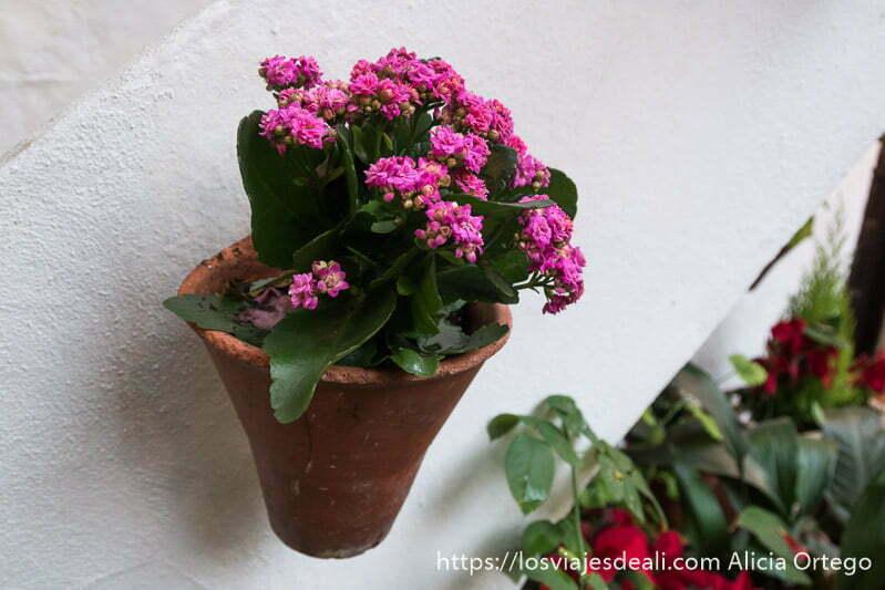 maceta con flores rosas anclada en una pared blanca