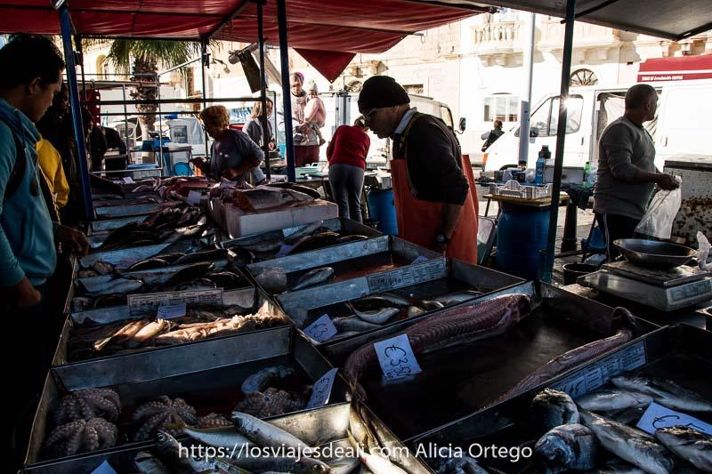 puesto de pescado con cajas de metal donde se distribuyen las diferentes especies