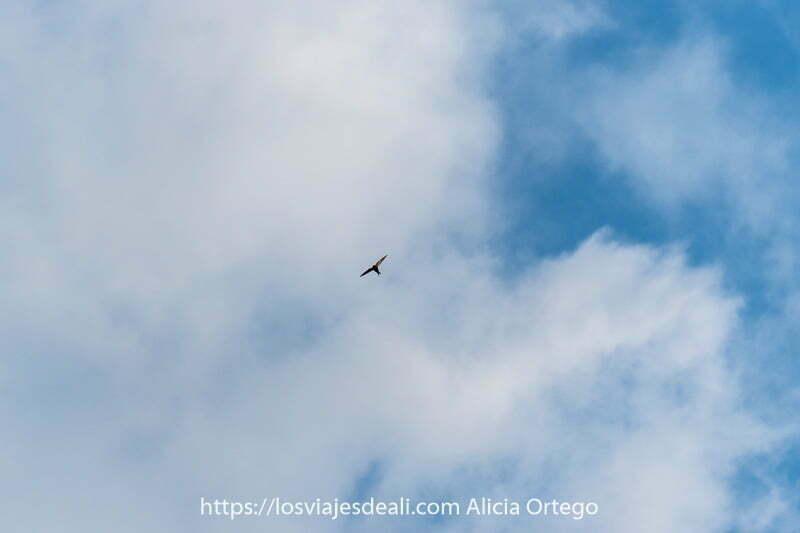 pájaro con alas abiertas volando con fondo de nubes blancas y cielo azul viajar desde casa