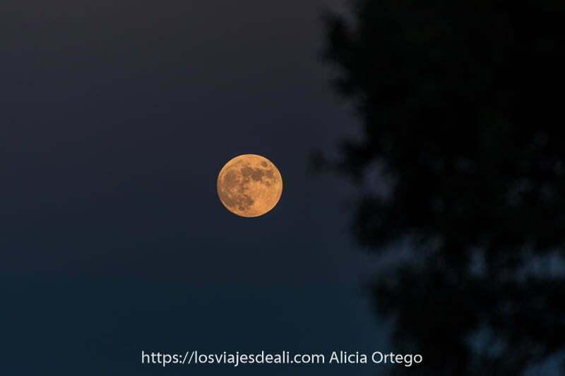 luna llena enrojecida por sol de atardecer y ramas de árbol desenfocadas a la derecha