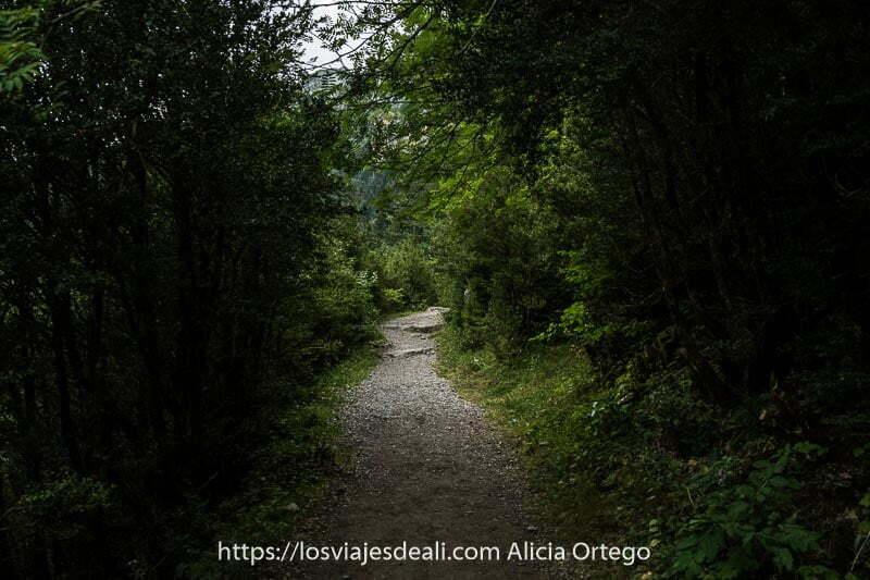 sesndero estrecho en sombras con árboles y vegetación a ambos lados en el Valle de Bujaruelo