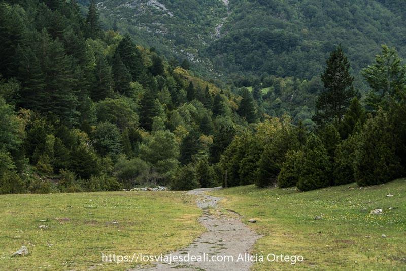 pradera con camino cruzándola y al final bosque de pinos silvestres pequeños, abetos y otros árboles en distintos tonos de verde