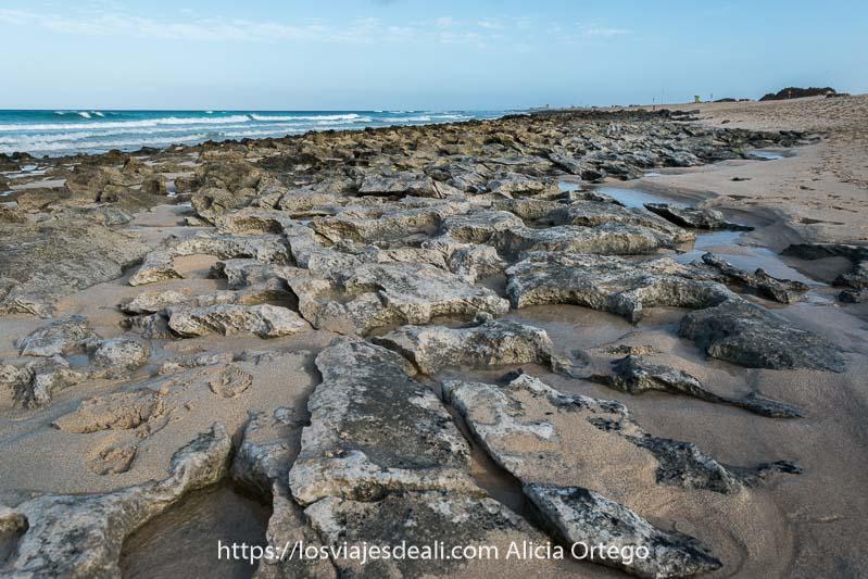 rocas volcánicas en la orilla de las dunas de corralejo