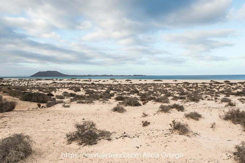 dunas de corralejo con muchos matorrales, el mar y la isla de lobos al fondo