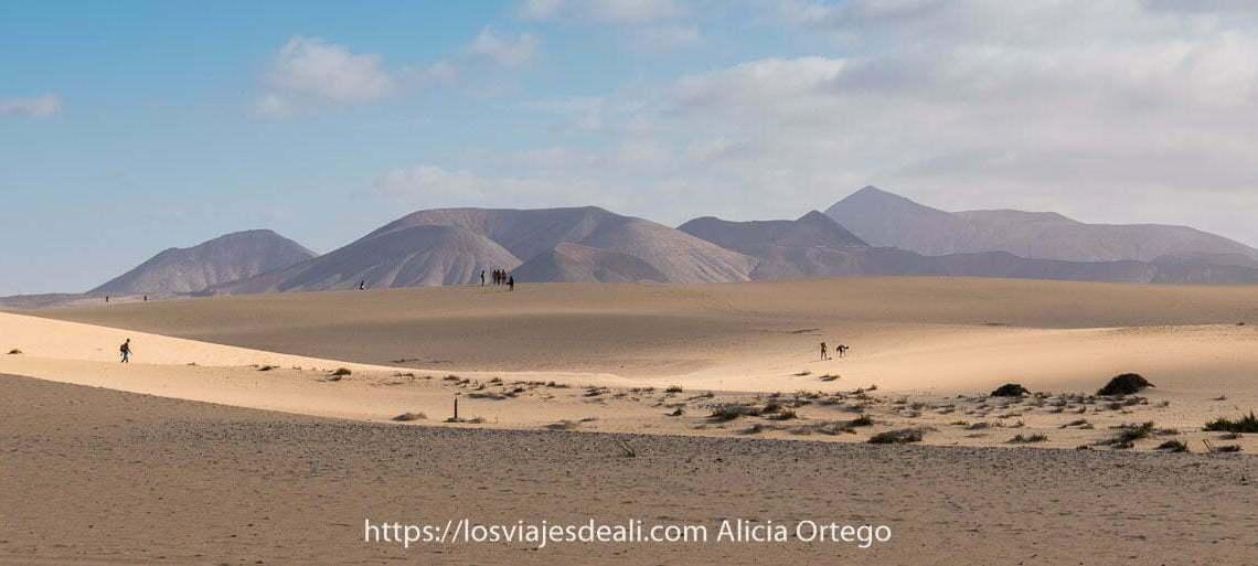 paisaje de dunas de corralejo con volcanes al fondo