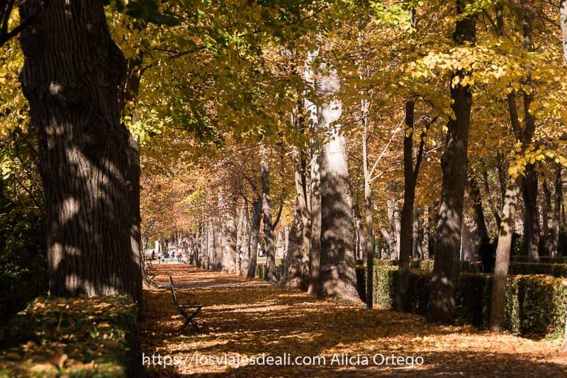 paseo del jardín con bancos de hierro y suelo lleno de hojas secas en Aranjuez