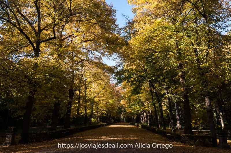 paseo del jardín del príncipe con árboles con hojas amarillas y naranjas y suelo lleno de hojas secas
