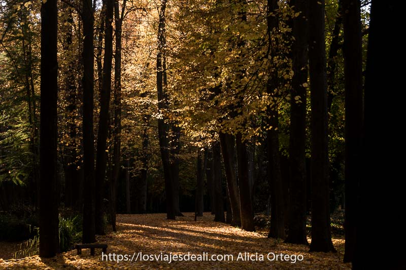rincón del jardín del príncipe con árboles de troncos oscuros y sol entrando entre hojas amarillas