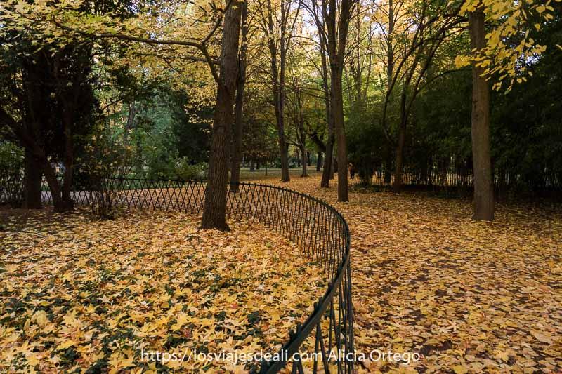 parque con suelo lleno de hojas amarillas en otoño