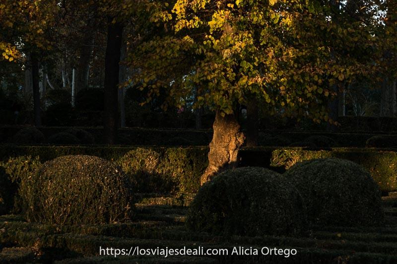 rayo de sol poniente iluminando parte de un tronco de árbol con hojas amarillas