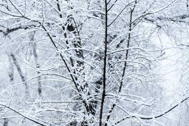 ramas finas sin hojas con una capita de nieve en madrid