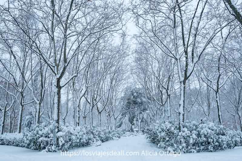 parque con árboles altos sin hojas lleno de nieve
