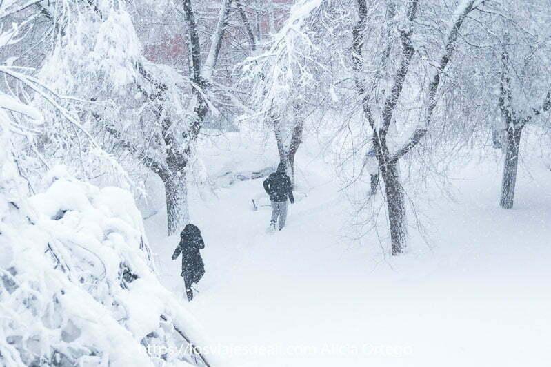 dos personas andando con nieve hasta la rodilla entre árboles todos blancos