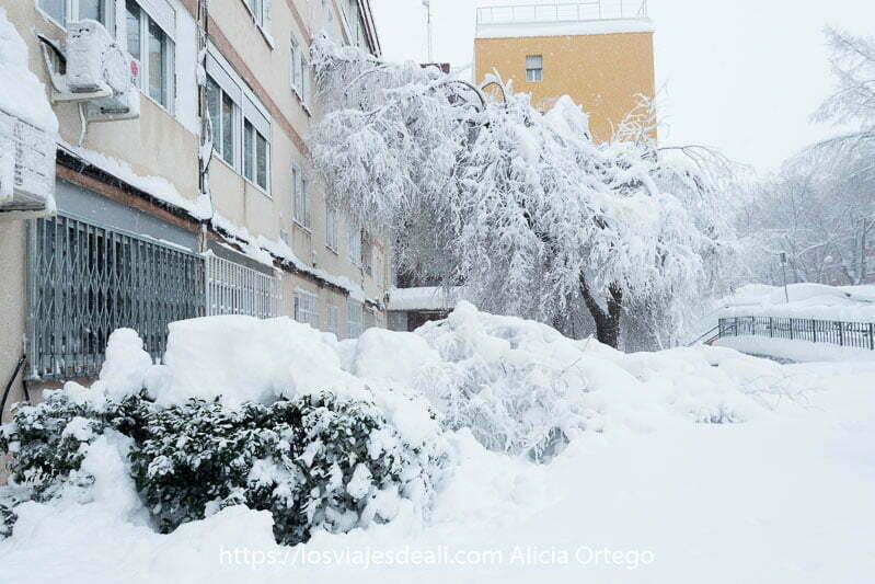 árbol vencido por la nieve contra una fachada