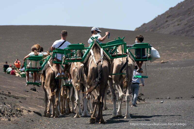 turistas montados en sillas verdes sobre los camellos haciendo el paseo en el echadero de camellos