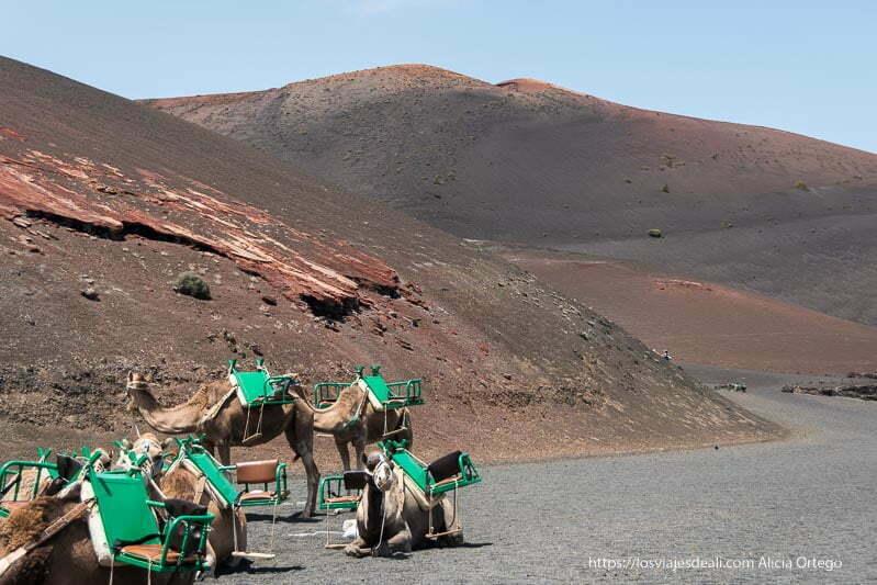 camellos sentados y de pie con sillas verdes esperando a los turistas y detrás volcán de color rojo