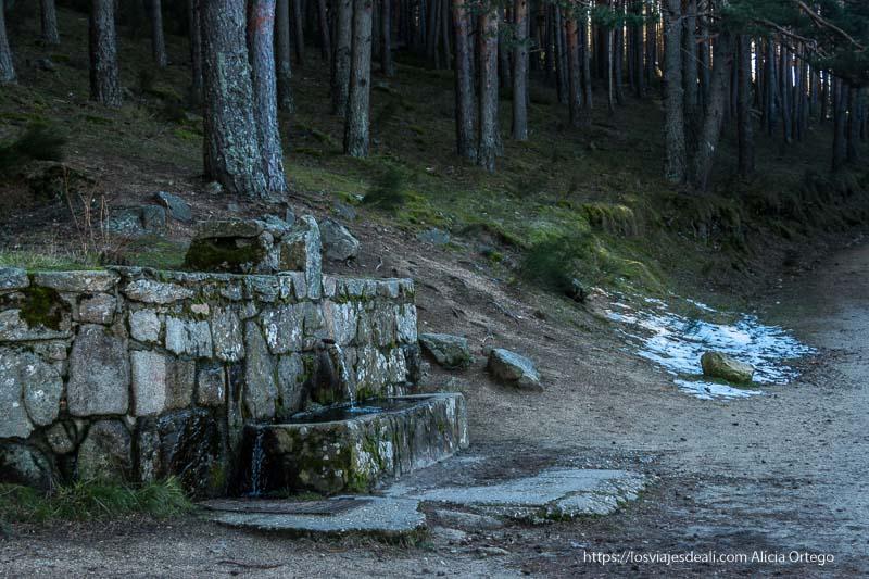 fuente de piedra junto al camino y el bosque de pinos de canencia