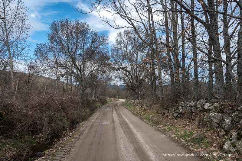 pista de barro con murete de piedras al lado y árboles sin hojas