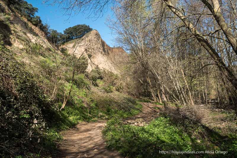 camino estrecho entre árboles y pendientes de arenisca