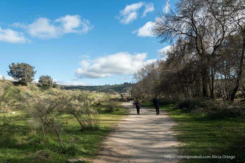 camino ancho y sin pendiente con árboles muy altos a un lado y prado con algunos matorrales al otro y cielo azul con nubes blancas