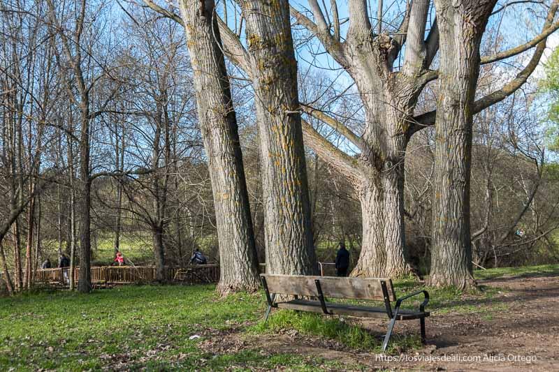 grandes árboles y un banco junto a un puente de madera por donde cruza la gente en el área recreativa de guadalix