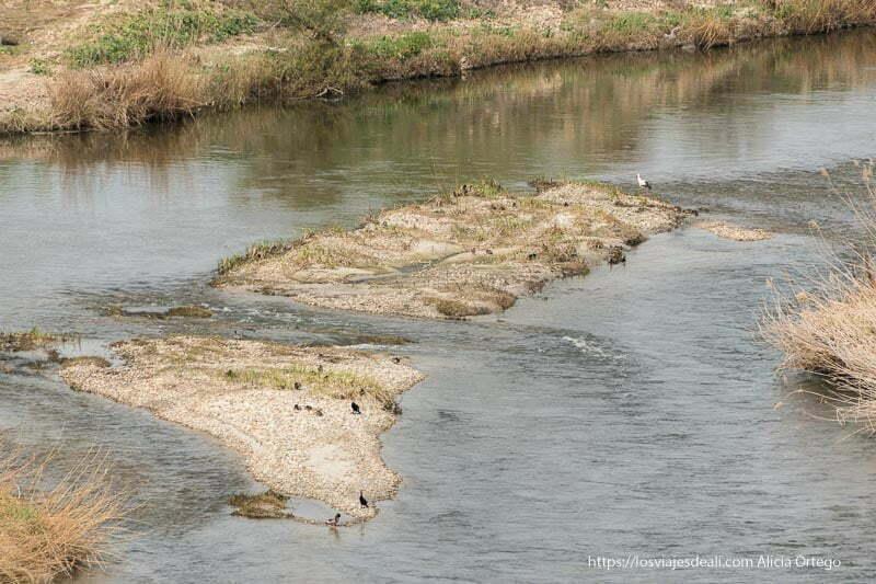 isletas en el río jarama con una cigüeña posada y patos
