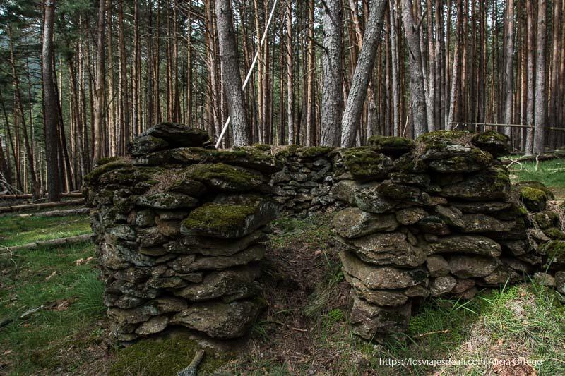 construcción circular de piedras con musgo en el pinar