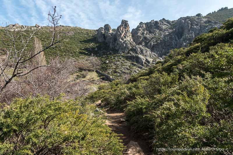 sendero estrecho entre jaras y montañas de granito al fondo