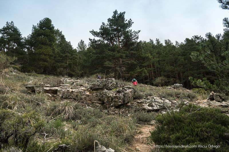 ladera con rocas y algunos arbustos y pinos alrededor