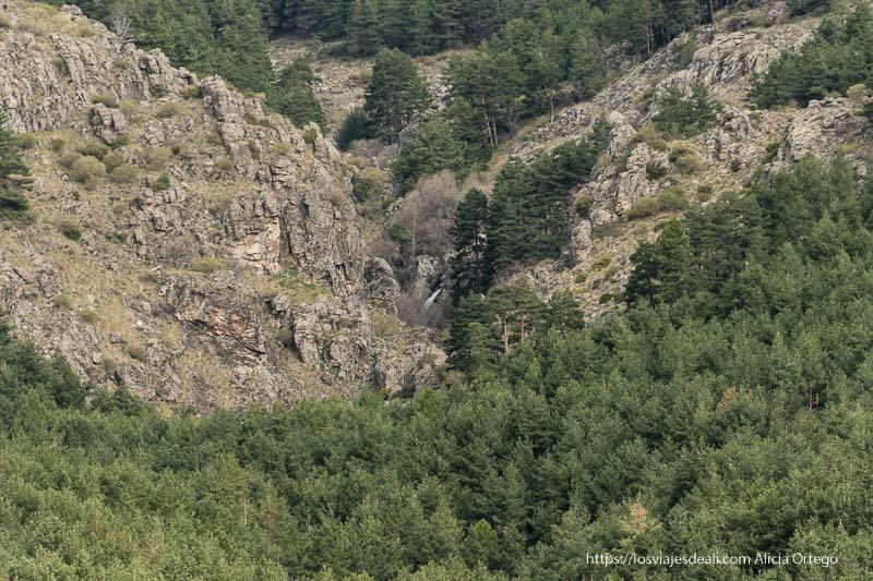 pinares y cañón con la cascada del cancho litero vista desde lejos
