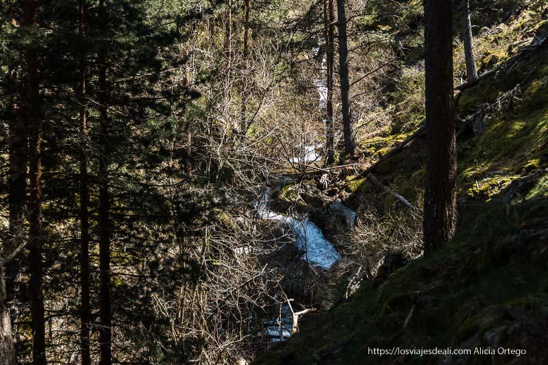 arrroyo abriéndose camino entre los árboles en la ladera de la montaña