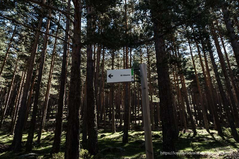 cartel que indica el camino a El Chorro entre grandes pinos