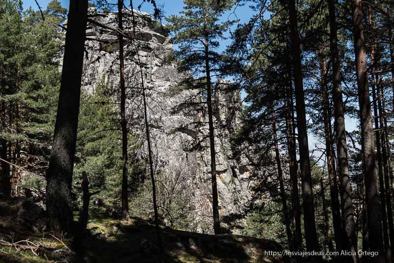 cortado de piedra vertical entre pinos que parecen igual de altos
