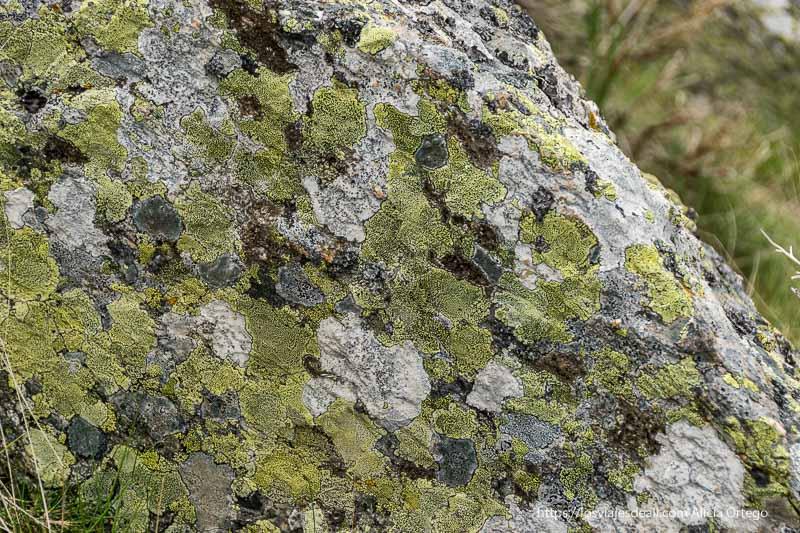 roca de granito con líquenes de color verde amarillo