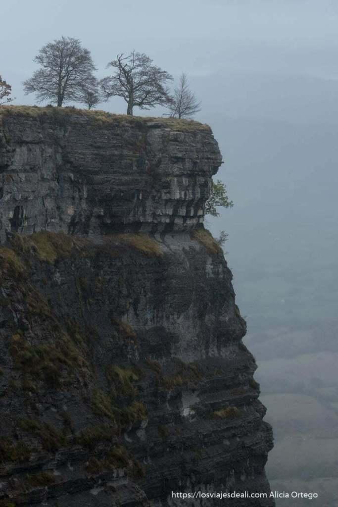 perfil del cortado de roca con tres árboles en la parte superior y mucha niebla
