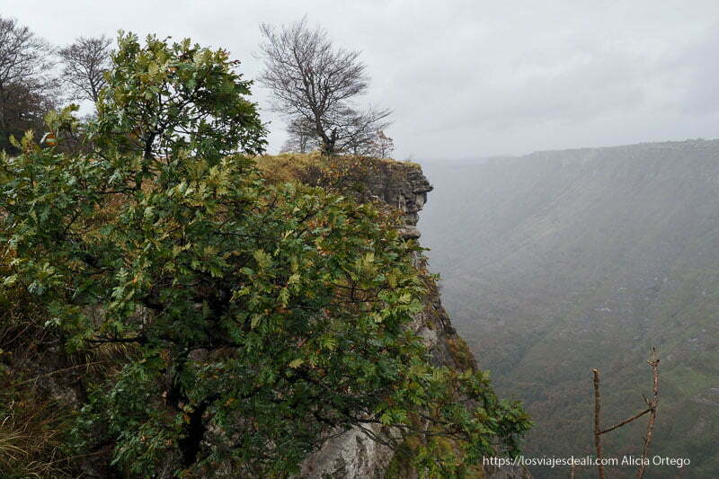 perfil del precipicio con árbol sin ramas en el borde y mucha niebla
