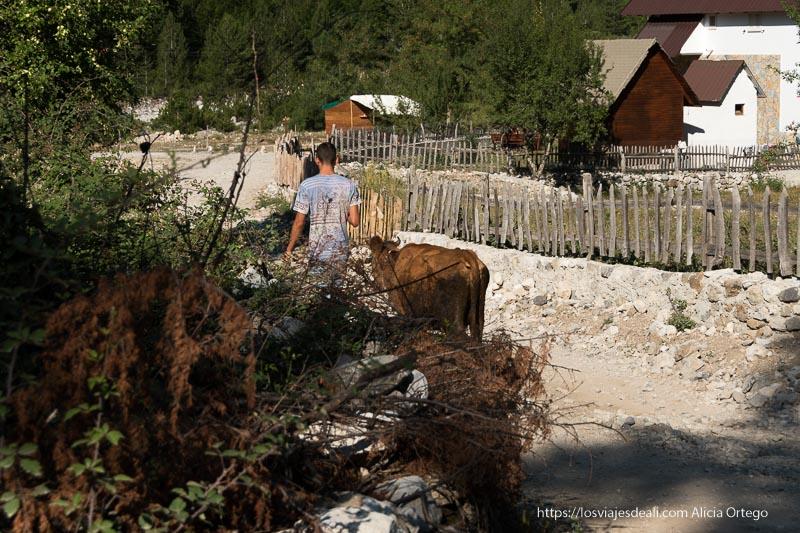 joven llevando a su vaca entre las casas y vallas de madera del valle de theth