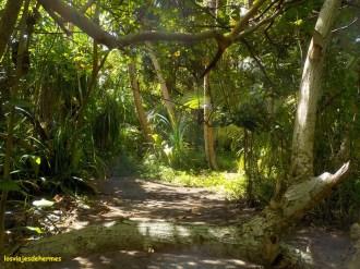 Cruzando la selva