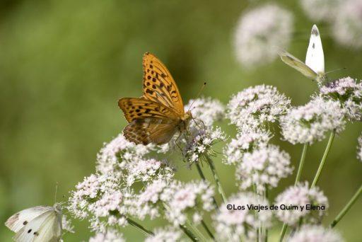 Mariposas por todas partes a la salida del cañón