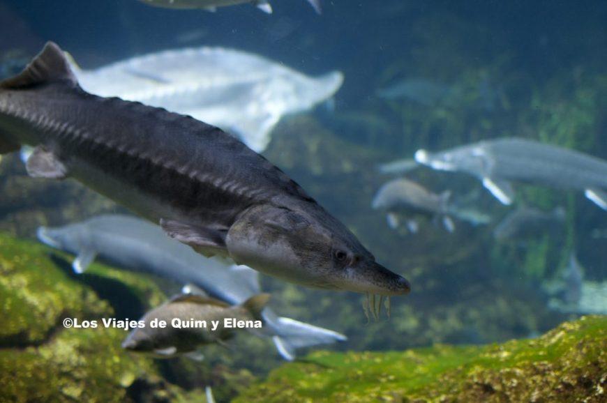 Diferentes peces en el Aquarium de Barcelona