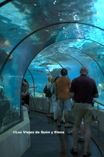 El túnel del Aquarium de Barcelona