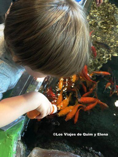 Éric dando de comer a los peces