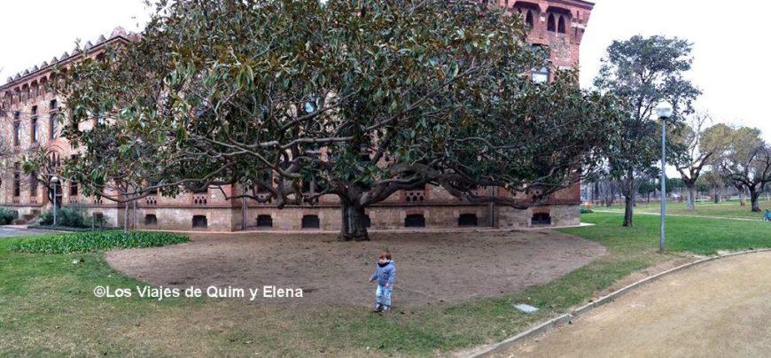 Árboles espectaculares en los Jardines de la Maternitat