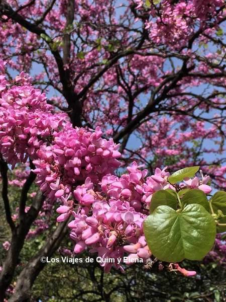 Árbol en flor en los parques y jardines poco conocidos de BCN