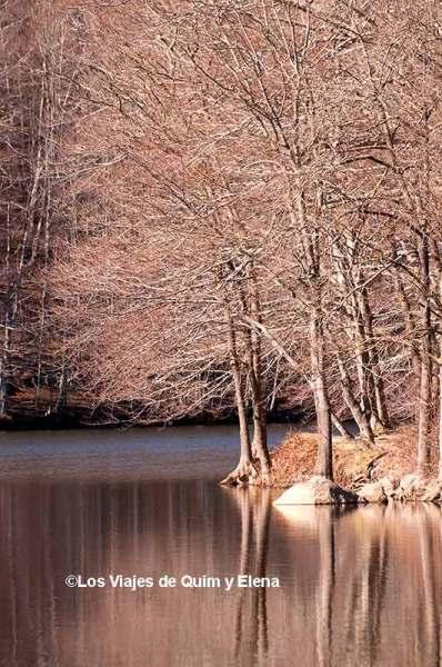 Santa Fe del Montseny, plantar un árbol