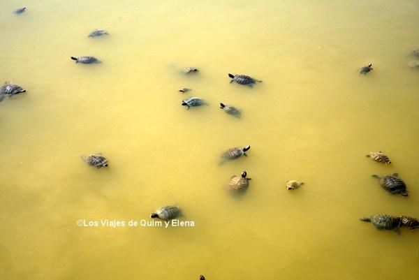 Tortugas en el Delta del Llobregat