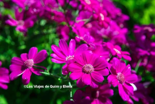 Flores en el Jardín Botánico Marimurtra
